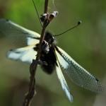 Schmetterlingshaft im Gegenlicht